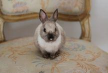 bunnies / by Haylee Nedblake