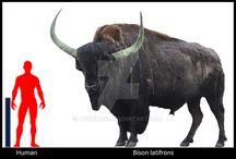 Biodiversity + Bovine