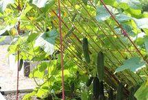 Anbau Garten