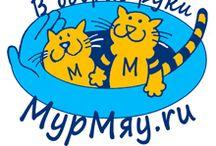 Котята,кошки в дар