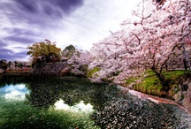"Hanami: la grande bellezza dell'effimero / La bacheca del post ""Hanami, la grande bellezza effimera"" http://giardinoindiretta.blogspot.it/2014/03/hanami-la-grande-bellezza-effimera.html"
