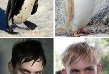 oswald penguin