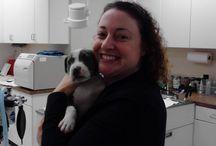 Value Pet Clinic: Bellevue / Photos taken at our Bellevue clinic. Located at: 14504 NE 20th Street Bellevue, WA 98007