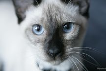 My Cat's Health / Cat related videos and articles and are specific to your cat's health!