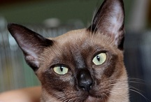 Interesting Facts and Research about Cats - Great Images / Interesting Facts and Research about Cats