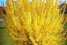 Spectacular Shrubs