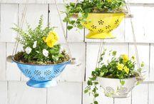 Giardinaggio / Idee per il giardino