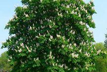 jesienny ogród / Pomarańcze, czerwienie i brązy pozwolą ci docenić urodę twojego ogrodu również jesienią. Ta pora roku to okres zbiorów warzyw, takich jak papryka czy dynia, jeśli więc lubisz gotować, będziesz mieć okazję do kulinarnych wyzwań! To też czas, kiedy z drzew spadają kasztany, a jarzębiny obrastają drzewa i krzewy. Dzięki tym darom ogrodu pożytecznie spędzisz czas ze swoimi dziećmi, składając z nimi kasztanowe ludziki. Zobacz, jak możesz zaaranżować swój ogród jesienią, by cieszyć się jego wdziękiem!