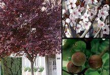 Plantas Arboles