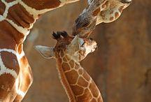Painting Inspiration- Safari/Jungle Animals / by Ashley Anderson