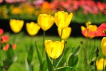 Long Island Spring / Spring on Long Island, NY