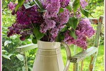 ΚΗΠΟΥΡΟΣ / Φυτά - Κήποι