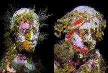 underwater / glony, porosty, woda
