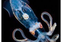 Glowing sea creatures