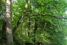 Tourbière des Dauges / Sur 200 ha, avec plus de 1900 espèces recensées, la réserve naturelle nationale des Dauges créée en 1998, a été confiée en gestion au Conservatoire régional des espaces naturels du Limousin.
