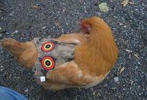hønsesal