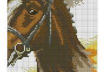 konie haft