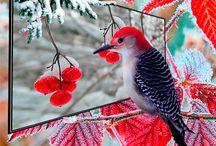 birds gifs