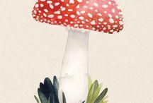 Art Funghi