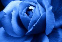 flower/jewelry.  Rose