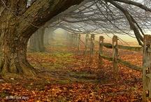 My Favorites - Nature / by argylesok