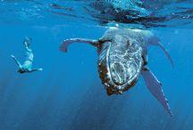 Scuba / Travel, scuba diving, ocean wonders