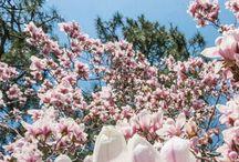 primăvara-vara