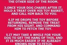 Hund träning