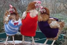 Funnies / Yes --puns and chicken jokes do give me the giggles most days..... / by Chérie Stihler
