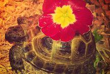 Tortoise  / M'y little tortoise