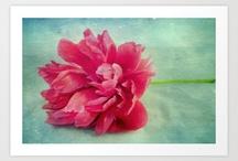 Flores, texturas... / by Liz Montañez