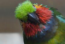 Bird Photography Lenses