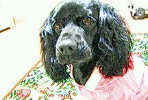 mrs.mago / my sweet dog