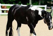 I Love Horses / Weeeeeeeeee ponies! / by Alyson Ben-Yehuda