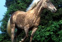 Horses / Awesome