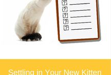 Cat and Kitten Advice