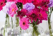 Flower: Gerbera