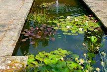 Bassin&jardin