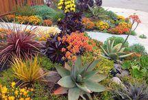Ogrody aranżacje / Pomysły na ogród