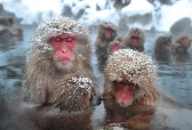 MonkeyLuv / by Poonam Melwani