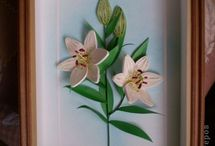 Pictures about lilies and more