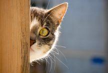 Cats :*