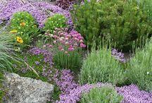 Trädgård -dammkulle