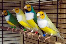 Ptaki.
