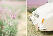 Lavender Weddings / Lavender Weddings