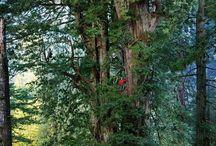 Rainforest tree