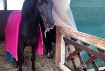 Farben für Pferde
