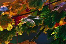 Autumn/höst