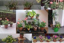 Kert és virág - Garden & flower