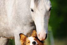 paard hond moodboard